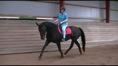 hest fyr samleje efter fødslen