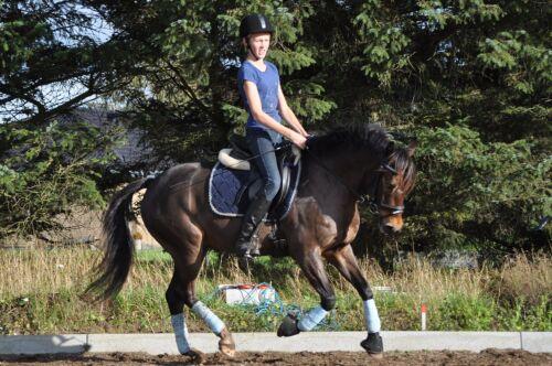 lidt min lille pony Albertslund