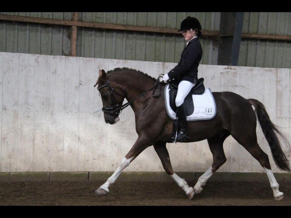 EB massage annoncer citater om heste