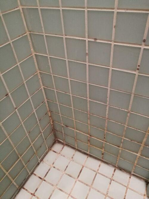 hvordan fjerner man skimmelsvamp på badeværelset