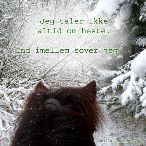 citater om heste Citater   Hyggesnak   Heste Nettet.dk citater om heste